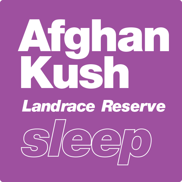 afghan kush terpenes for sale