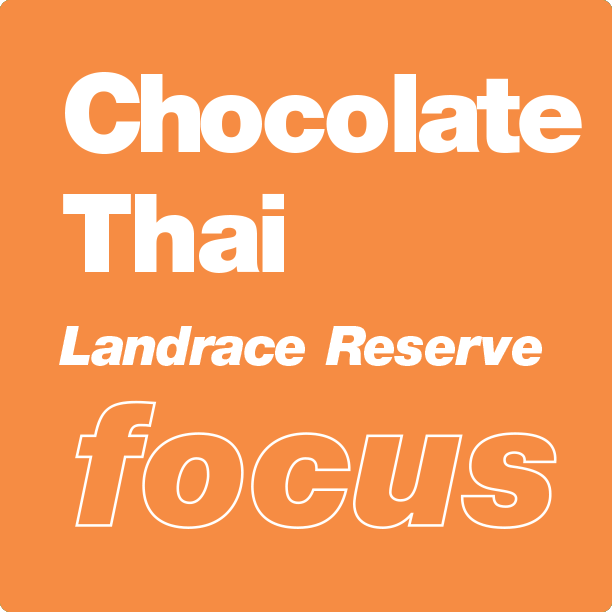 chocolate thai flavored terpene blend for sale