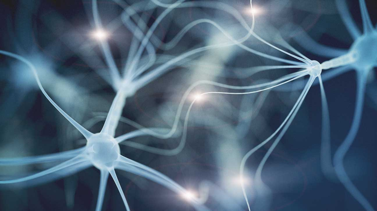 Brain Optimization Throughout The Lifespan Daily Manufacturing