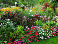 ​Protecting Your Gardens From Summer Heat
