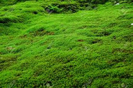 Moss For Sale Online