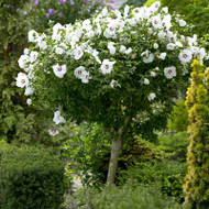 How and When to Prune Flowering Shrubs