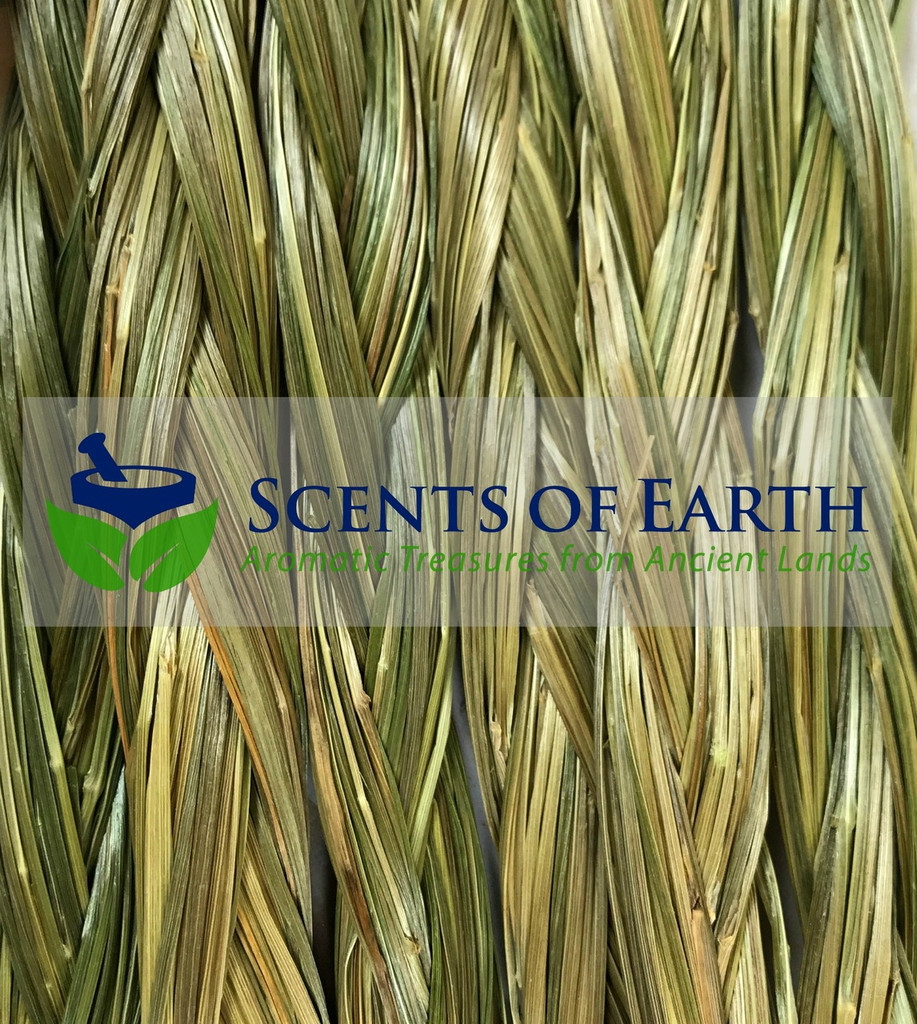 Sweet Grass Braid (Heirochloe odorata) - USA