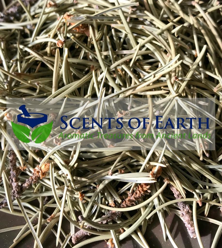 Pinon Pine Needles (Pinus edulis)  - United States