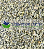 Lavender (Lavandula officinalis) - France