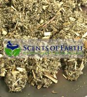 Mugwort - Cut (Artemisia vulgaris) - Hungary (IRO78)
