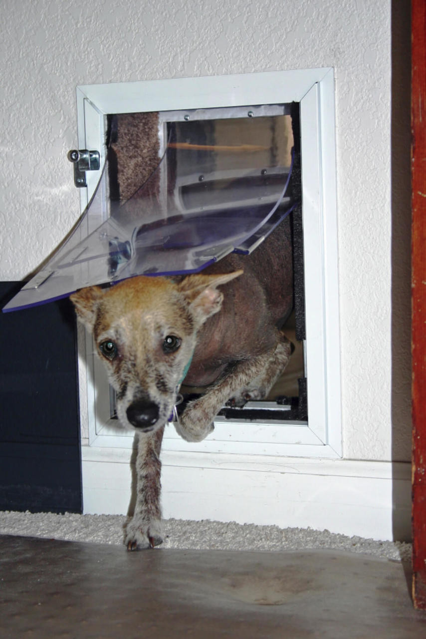 Hale doggy doors for walls come with a tough security cover that locks so that it can't be removed from the outside