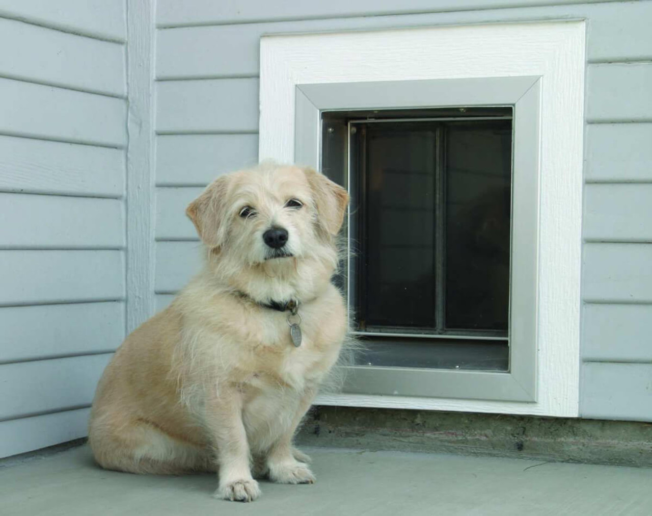 PlexiDor Wall pet doors have a keyed lock to prevent the flaps from opening