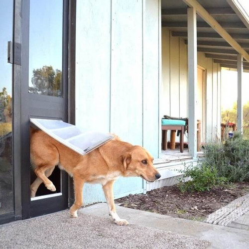 ... Thermo Panel 3e Endura Flap Dog Doors Feature Low E Glass And Excellent  Weather Resistance ...