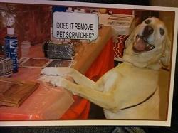dog-scratches-kitchen-cabinet-cleaner.jpg