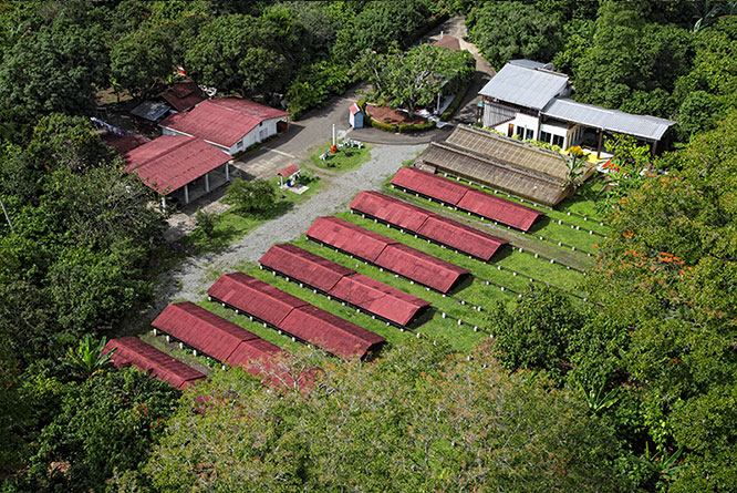 farm-where-cacao-is-grown.jpg