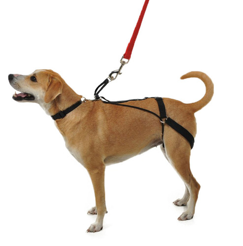 Horgan No Pull Dog Harness