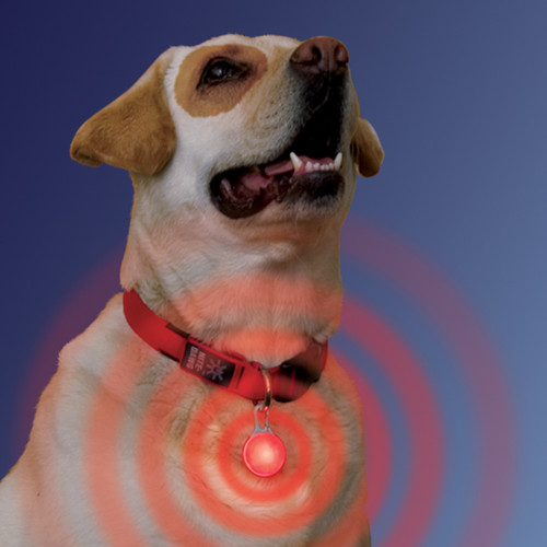 LED Light Up Collar Tag | Red