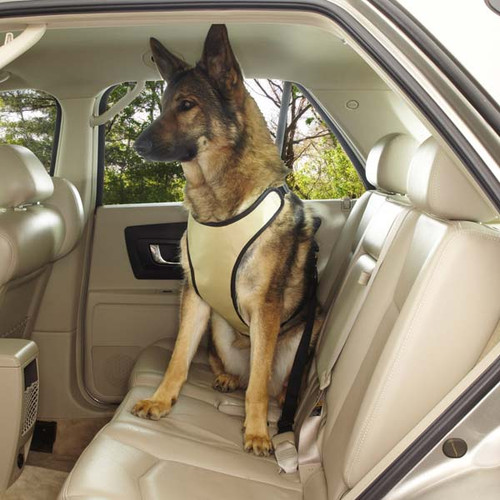 Ride Right Dog Car Harness