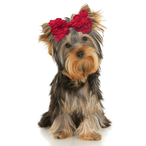 Oversized Chiffon Hair Bow | Red