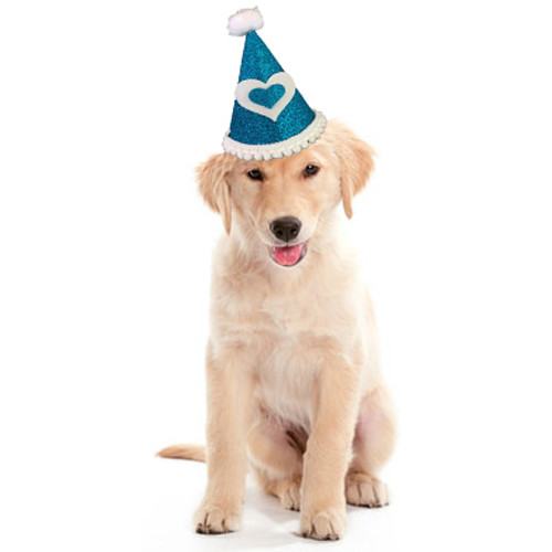 Deluxe Birthday Party Hat  | Turquoise