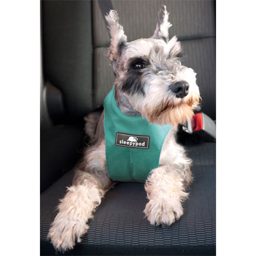 Sleepypod Clickit Sport Dog Safety Harness | Robins Egg Blue