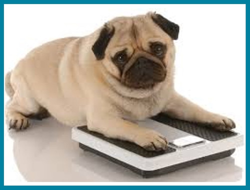 Is Your Puppy Overweight?