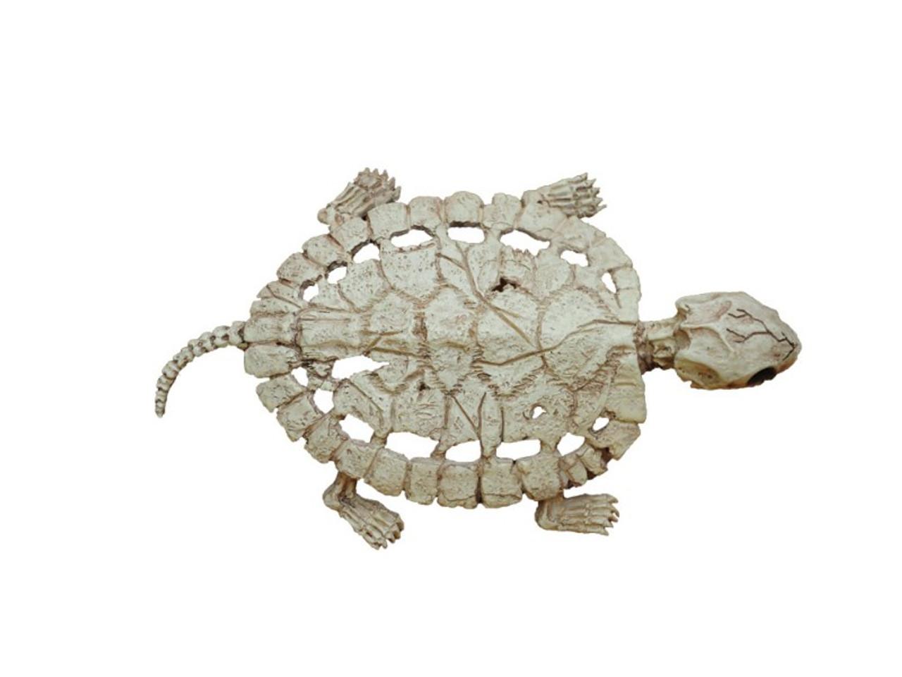 Turtle Skeleton | Cheap Halloween Skeleton Decor Save (25%)