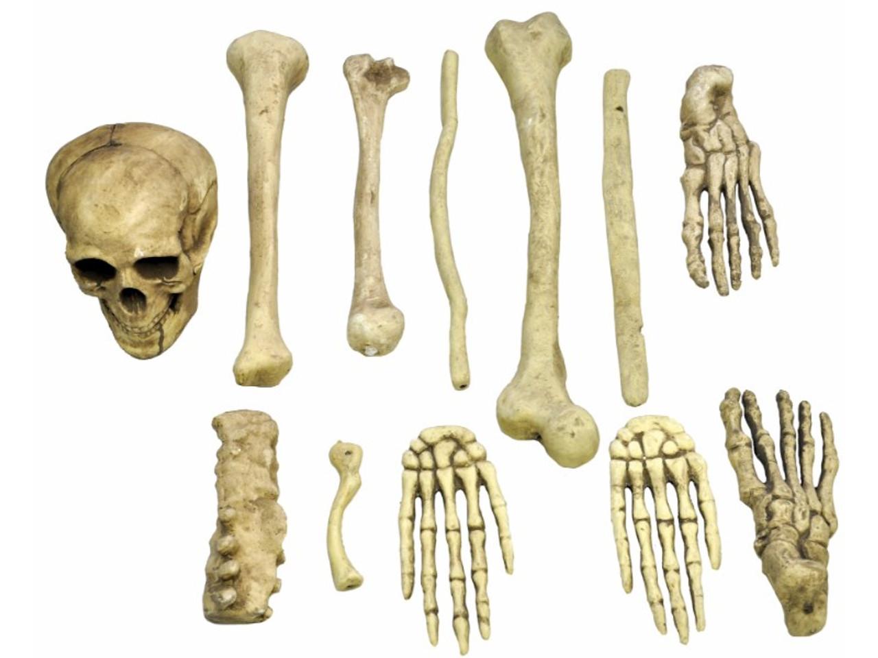 Buy Skeleton Bones In Bag That Has An Assortment Of 12