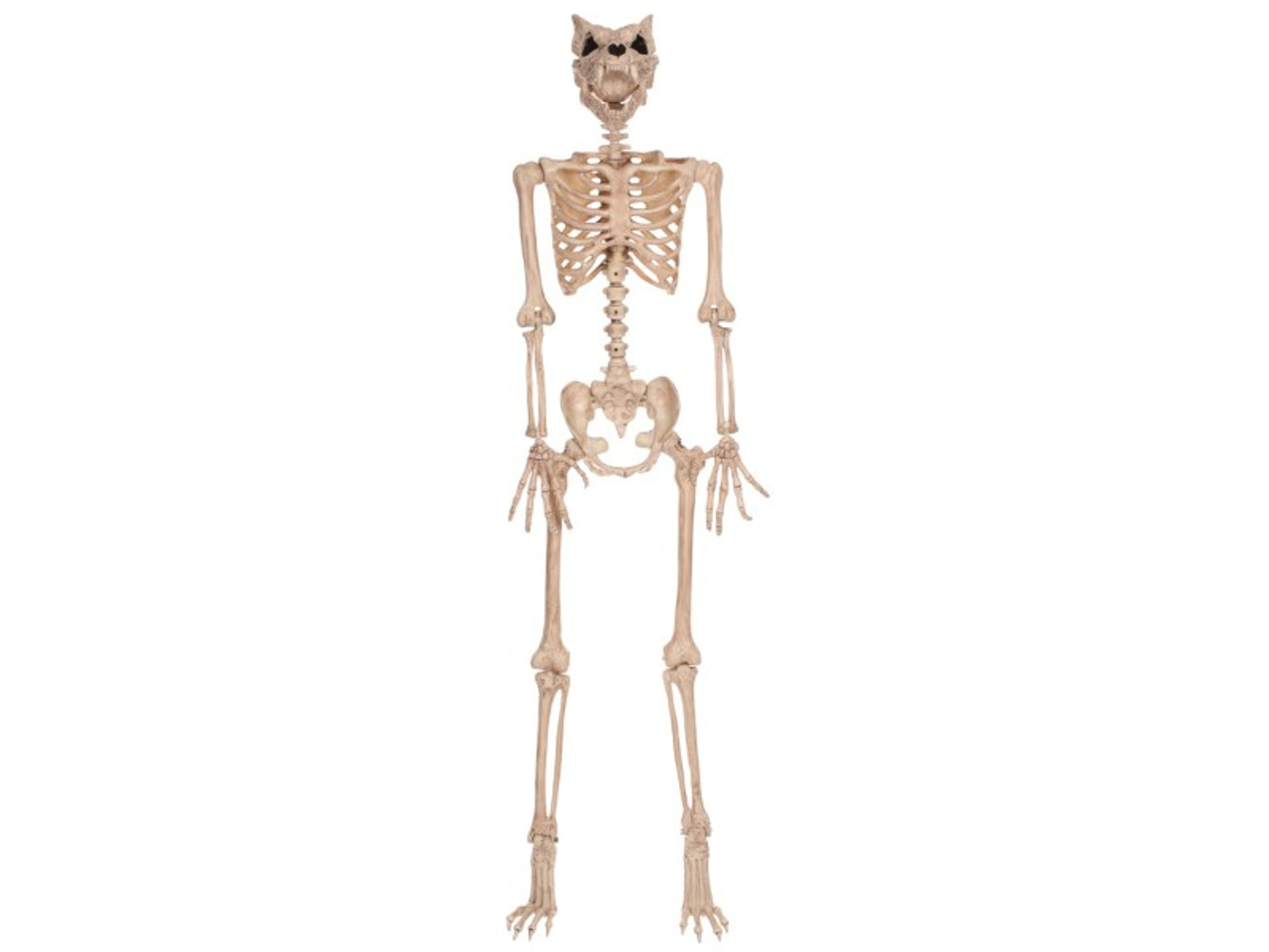 Skeleton Werewolf Prop 5 Ft Tall   These Bones Can Howl!
