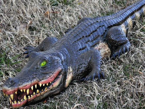 This Lifelike Alligator Prop will scare anyone with it's realistic look.  He looks like the real deal, made of foam-filled vinyl. He is nearly 4 feet long. Excellent color and detailing.
