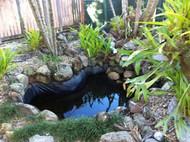 Amazing New Turtle Pond
