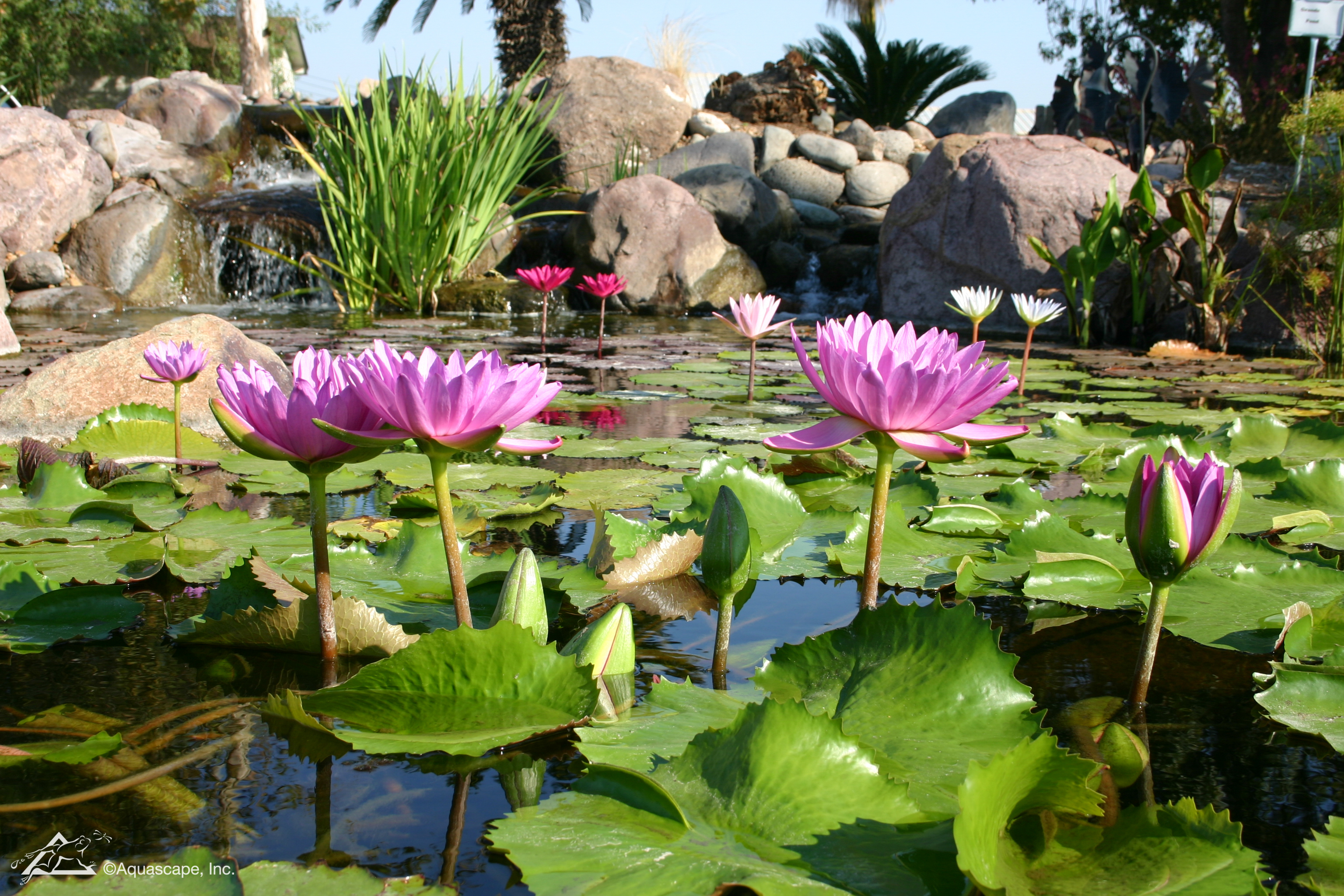 8 Spring Maintenance Tips for Your Pond