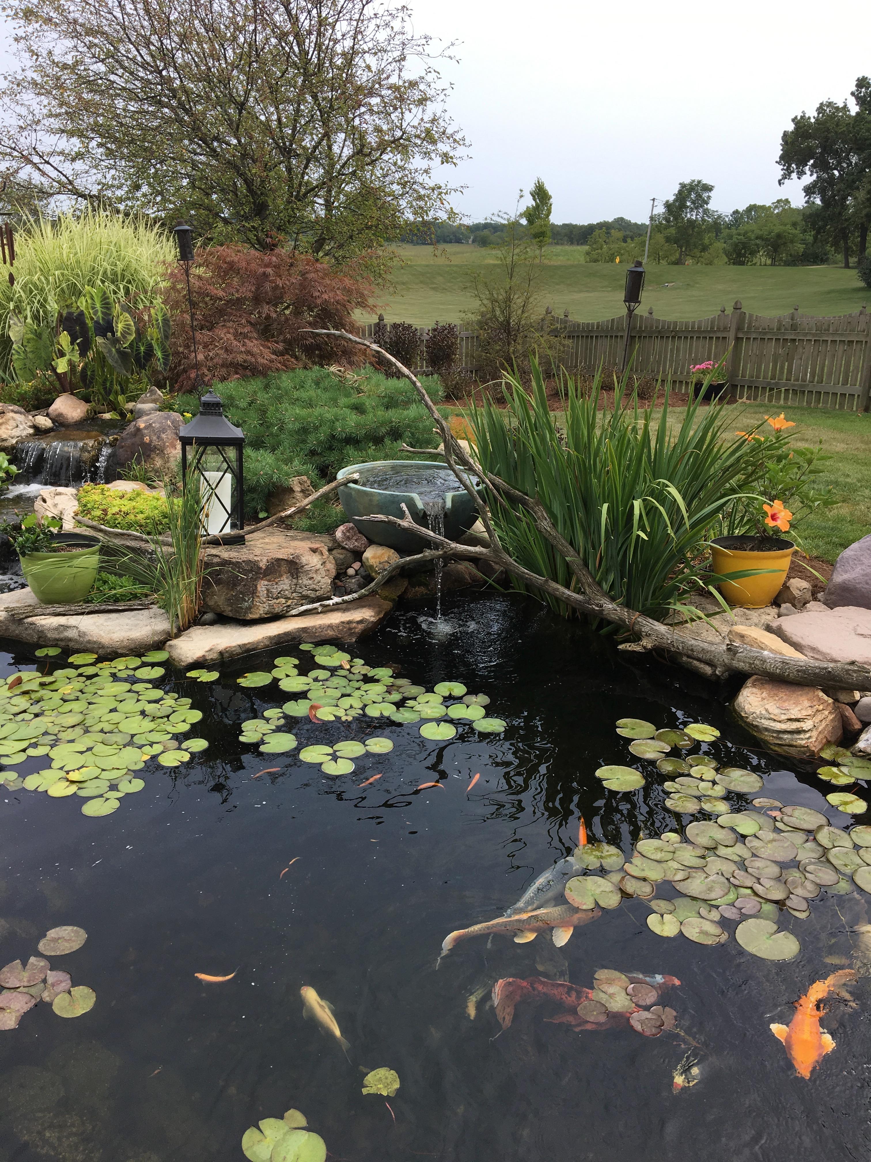 Garden Ponds Backyard Pond Aquascape Supplies Australia