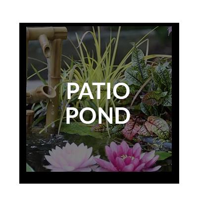 patiopond.png