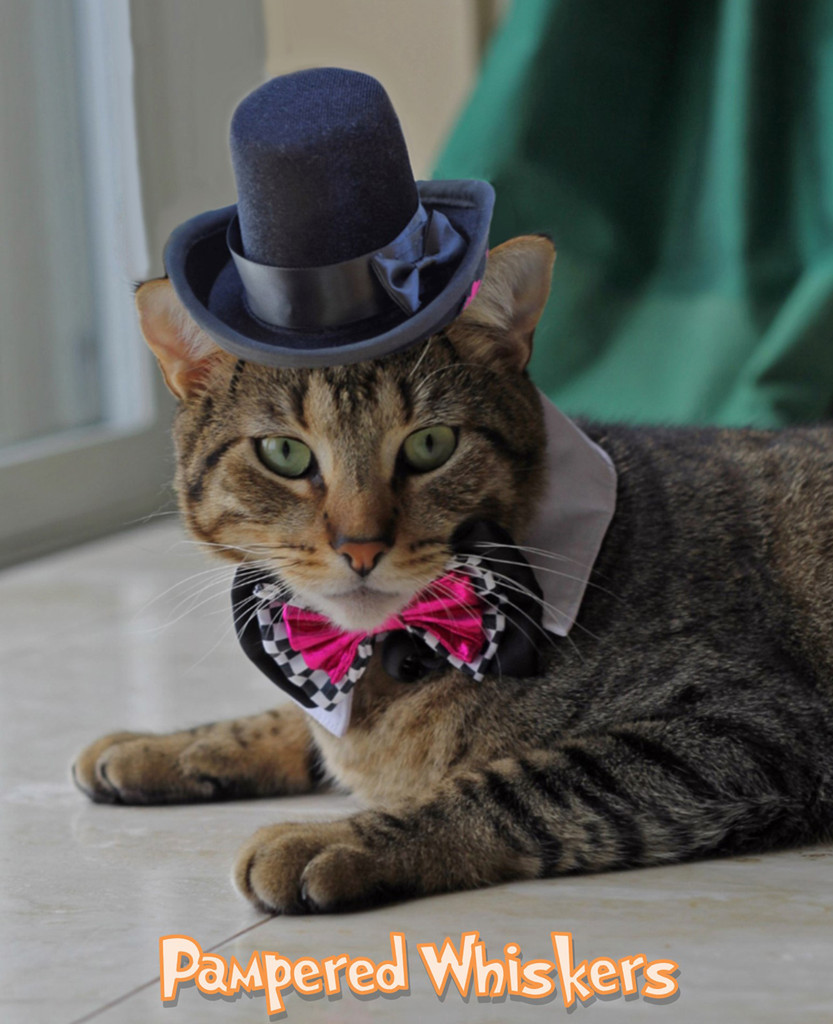 Top Hat for cats-dogs