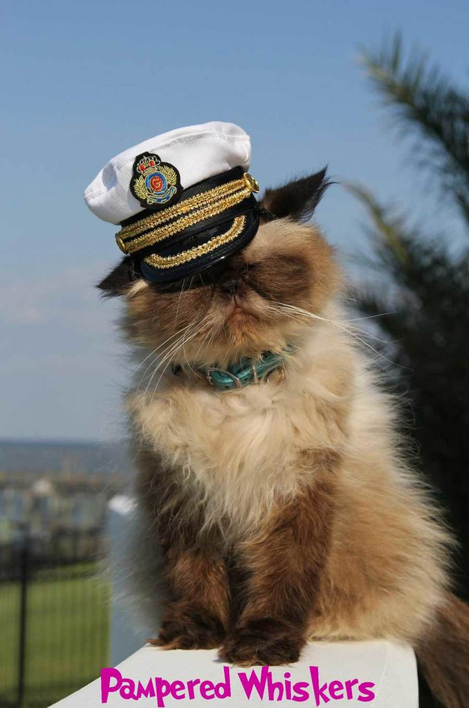 captain hat for cat