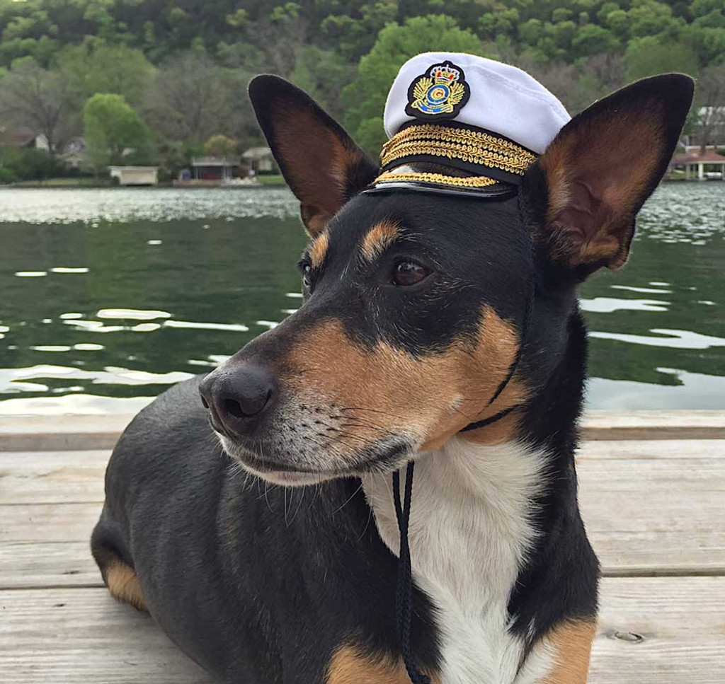 dog captain hat