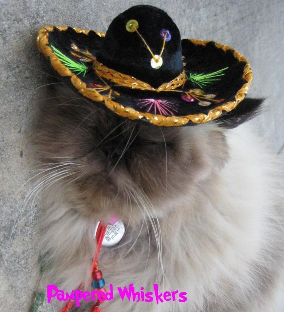 Buckaroo Black sombrero for cats and dogs