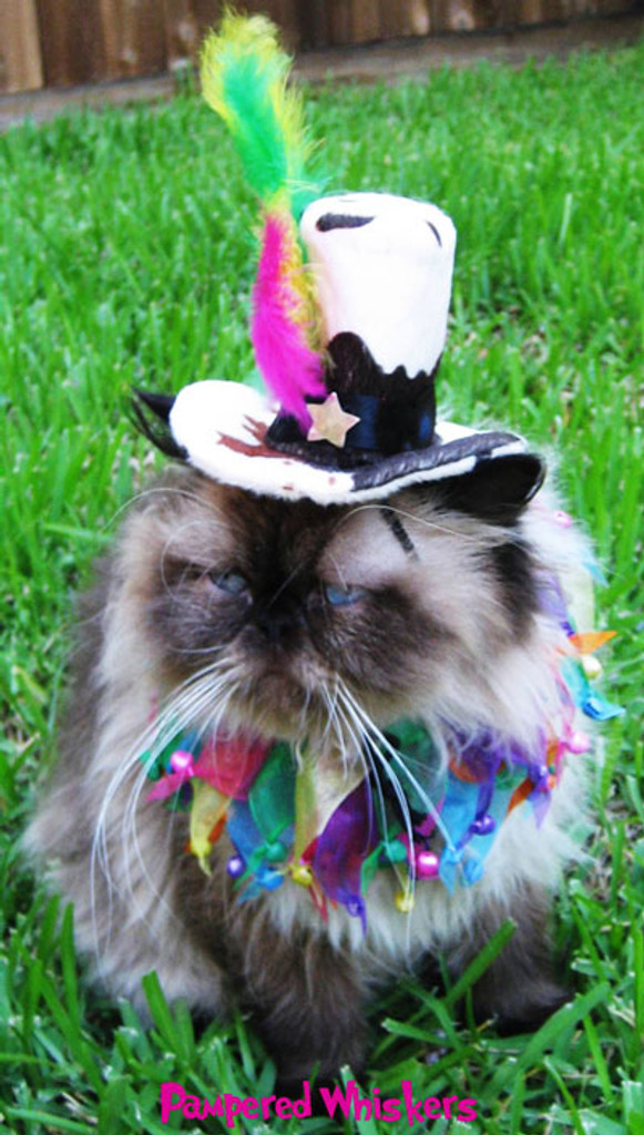 Shimmering Sunset party collar with Mad Hatter top hat for cats and dogs