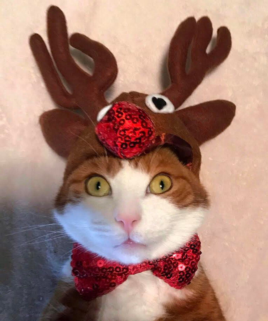Reindeer antlers for cats