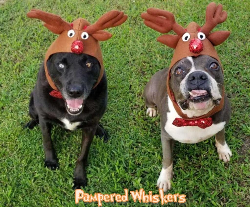 Dog Reindeer Costume