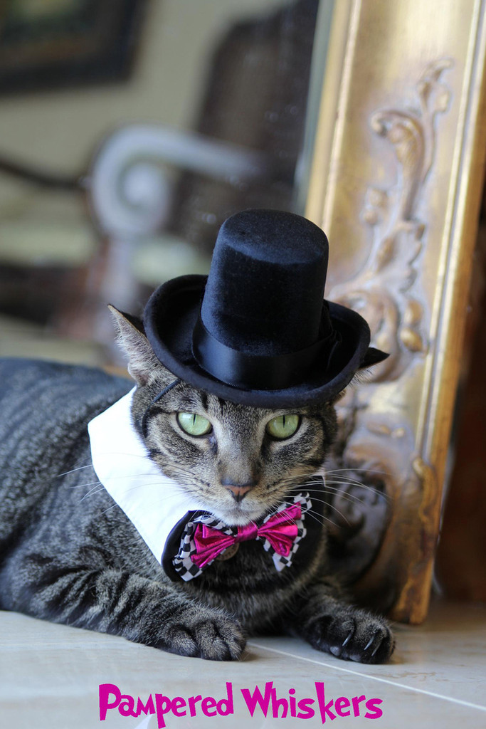 The Aristocrat Top Hat for cats and dogs