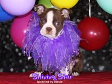 purple dog cat party collar