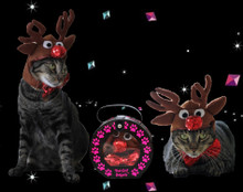 Rudolph the red nosed reindeer hat for cats and dogs.