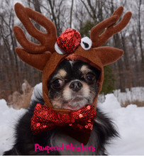 Reindeer antlers for small dogs.
