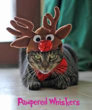 Cat reindeer hat