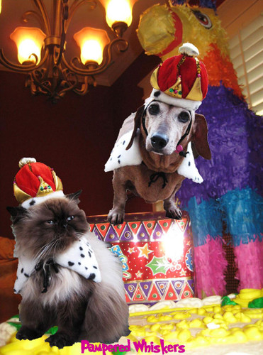 crown hat for dogs and cats
