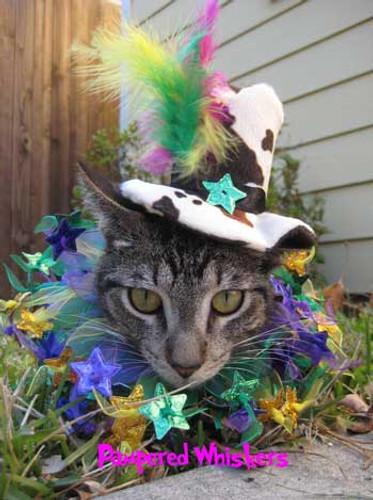 Mad Hatter cat hat