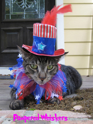 Uncle Sam hat and Stars n Stripes Political Pundit party collar