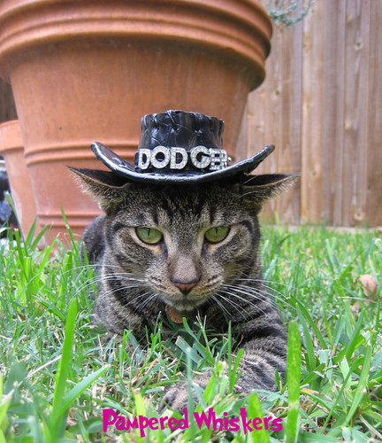 black cowboy hat for cats and dogs