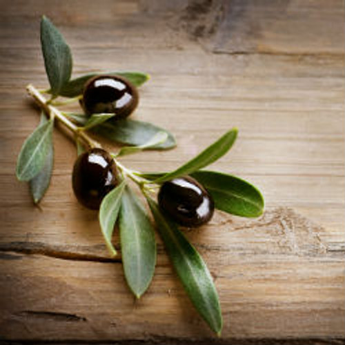 The Olive Branch- Type* Fragrance Oil