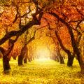 fall-category.jpg