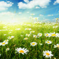 spring-category.jpg