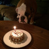 "Customized Birthday Cakes for Dogs - All Natural, Organic - Actual Size (4.5"" round x 2.25"" high)"